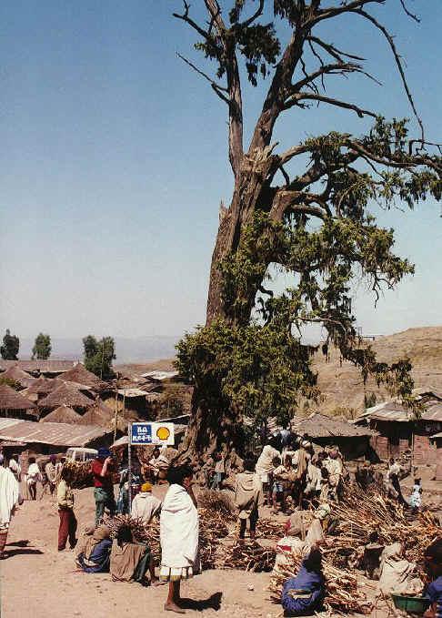 ethiopia136.jpg (263470 bytes)