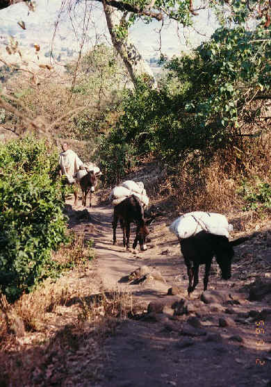 ethiopia191.jpg (294243 bytes)