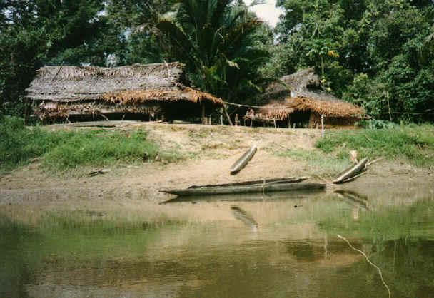 newguinea170.jpg (288224 bytes)