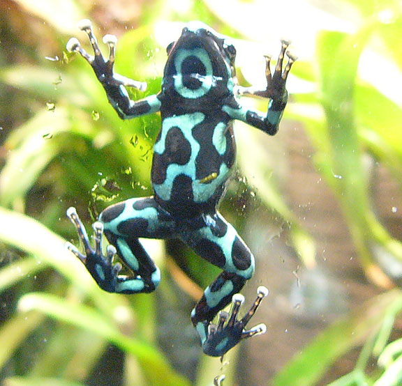 Natural History Museum New York Frog