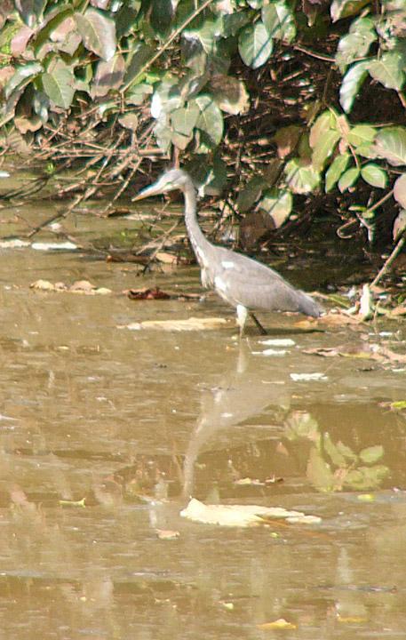 Abuko Nature Park Gambia