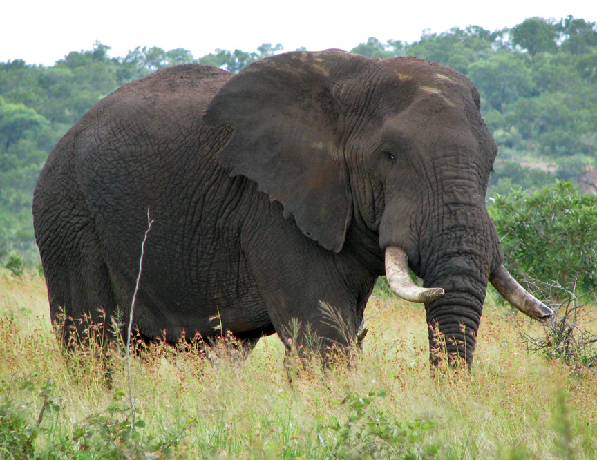 Elephants in Kruger National Park, South Africa - Travel Photos by ...