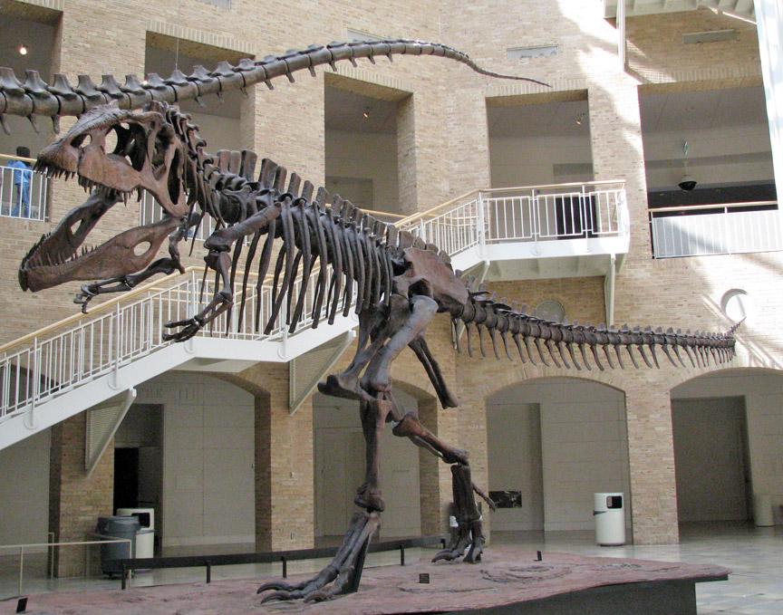 Natural History Museum Of Georgia