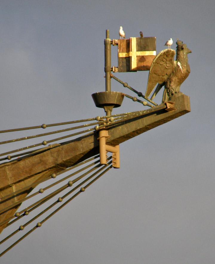 Gulls on the bow sprit