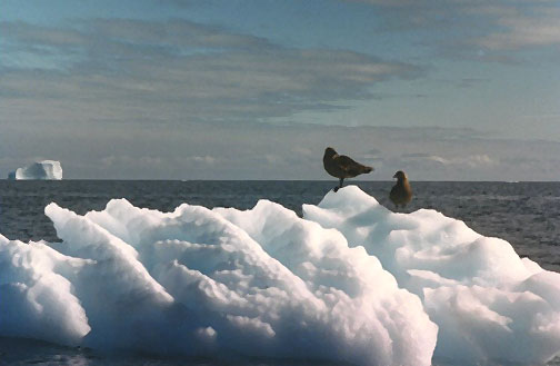 antarctica09.jpg (61740 bytes)