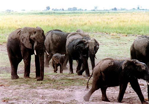 elephant.jpg (74011 bytes)
