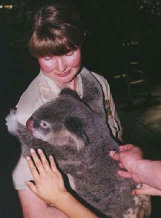 koala01.jpg (61937 bytes)
