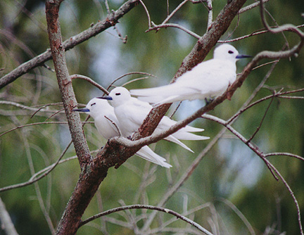 midway_bird04.jpg (116219 bytes)