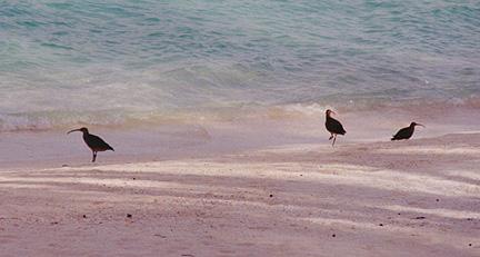 midway_bird13.jpg (74503 bytes)