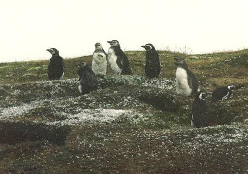 penguin01.jpg (110382 bytes)