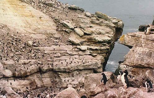 penguin02.jpg (151192 bytes)