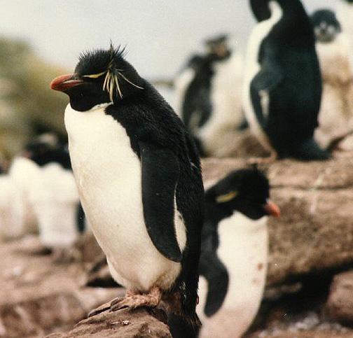 penguin03.jpg (134702 bytes)