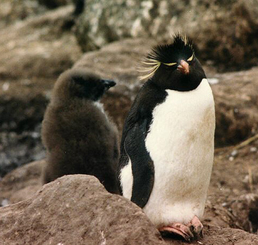 penguin04.jpg (141998 bytes)
