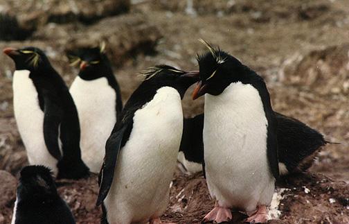penguin05.jpg (104425 bytes)