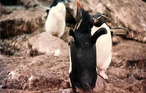 penguin06.jpg (120337 bytes)