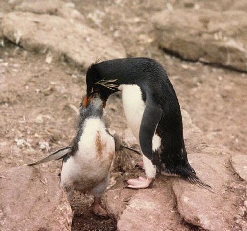 penguin07.jpg (147911 bytes)