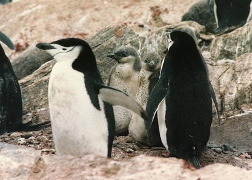 penguin09.jpg (128190 bytes)