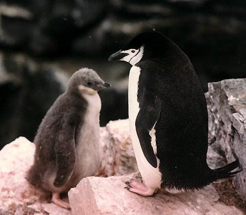penguin10.jpg (138806 bytes)