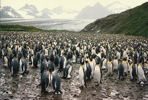 penguin13.jpg (155265 bytes)