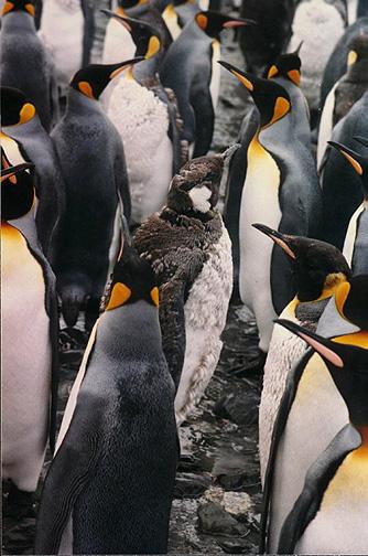 penguin14.jpg (123547 bytes)