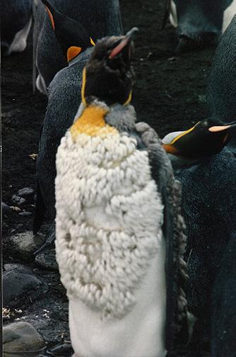 penguin16.jpg (107687 bytes)