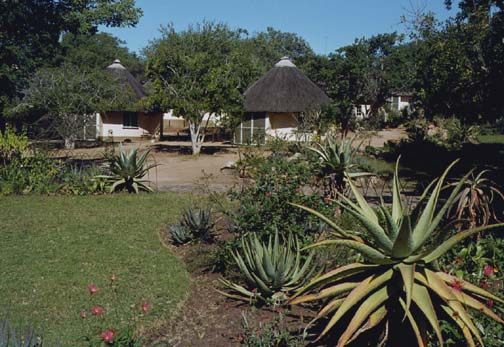 southafrica4.jpg (80512 bytes)