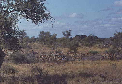 southafrica5.jpg (75650 bytes)