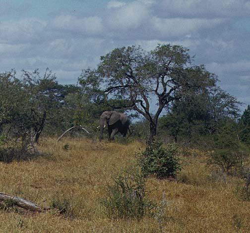 southafrica6.jpg (97085 bytes)