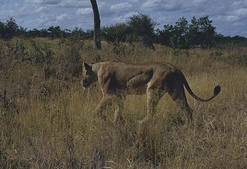 southafrica7.jpg (71925 bytes)