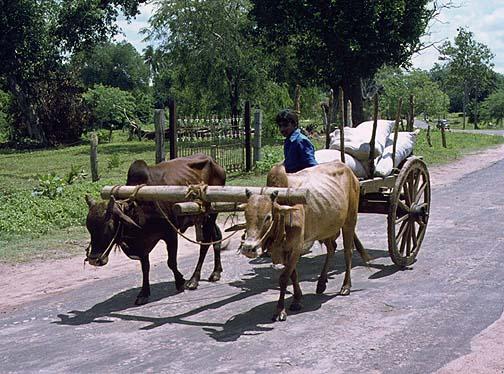 srilanka2.jpg (96992 bytes)