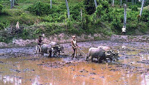 srilanka4.jpg (91067 bytes)