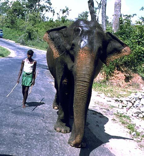 srilanka6.jpg (116638 bytes)