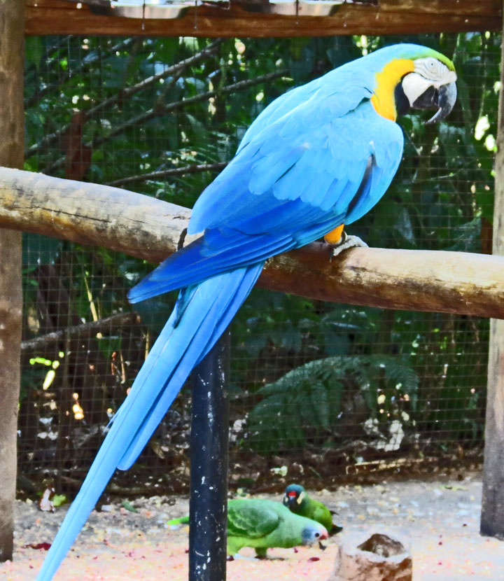 macaws at the bird park iguassu falls brazil travel photos by