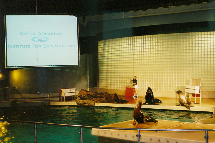 Sea Lions Exhibet At The Mystic Aquarium Mystic