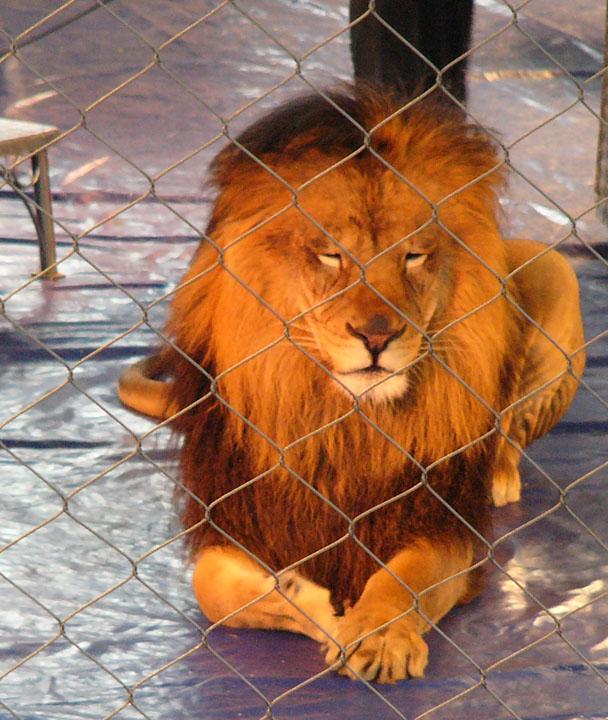 Circus animals in cages
